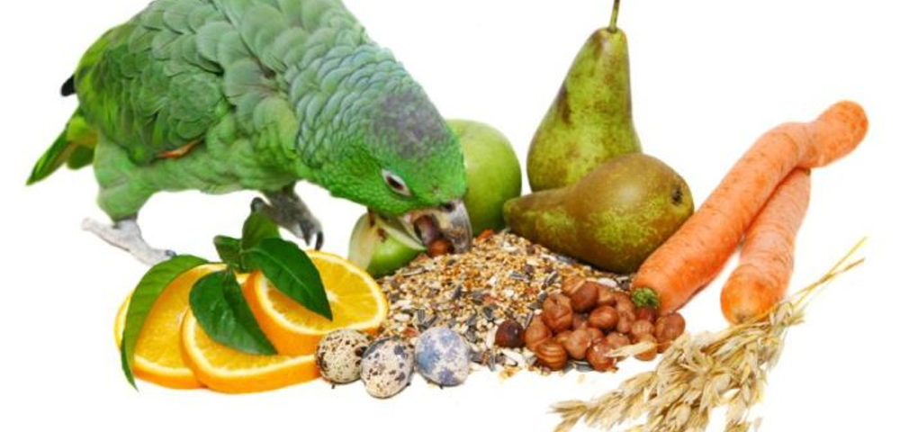 A Good Parrot Diet is Essential For a Healthy Parrot