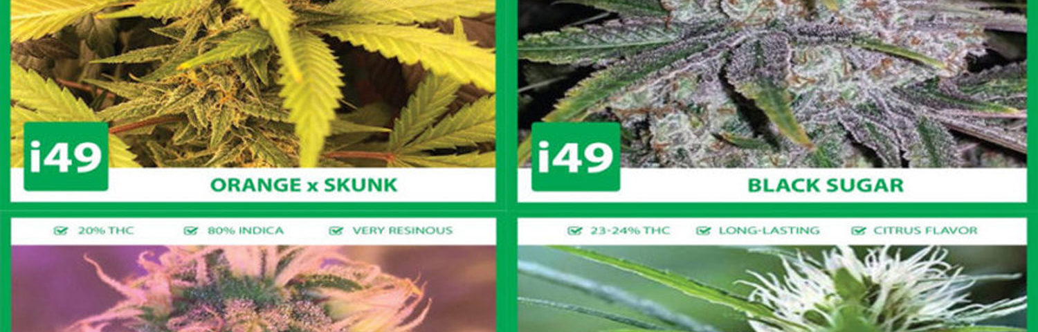 Importance of Buying High Quality Marijuana Seeds
