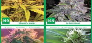 Importance of Buying High Quality Marijuana Seeds